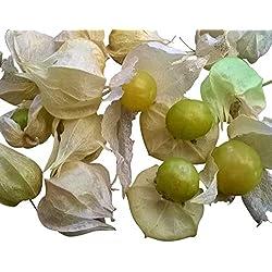 Ananaskirsche (Physalis pruinosa) 10 Samen (Die leckere Mini-Physalis)
