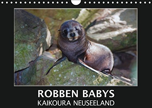 ura Neuseeland (Wandkalender 2016 DIN A4 quer): Nehmen Sie teil am Leben und Spielen süßer Robbenkinder in ihrer natürlichen ... (Monatskalender, 14 Seiten) (CALVENDO Tiere) (Nehmen Sie Teil)