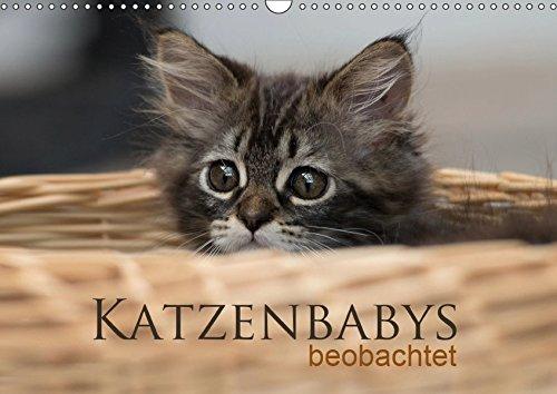 Katzenbabys beobachtet (Wandkalender 2019 DIN A3 quer): Dreizehn zauberhafte Bilder der süßen Katzenbabys. Mit der Kamera beobachtet, machen sie viel (Monatskalender, 14 Seiten) (CALVENDO Tiere)