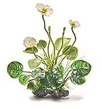 Pistachio Pet Dekopflanze für Aquarien, naturgetreues Design, mit Sockel, 32 cm hoch. Kollektion 2017!