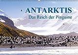Antarktis - Das Reich der Pinguine (Wandkalender 2019 DIN A2 quer) - Max Steinwald