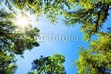 druck-shop24 Wunschmotiv: Baumkronen umrahmen Den sonnigen Himmel #61813055 - Bild als Klebe-Folie - Quadratisch - 60 x