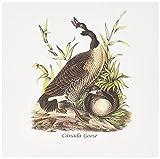 3drose Grußkarten, 15,2x 15,2cm, 6Stück, Canada Goose von John James Audubon ((GC 114099_ 1)