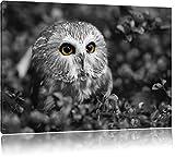 junger Kauz im Vogelbeerstrauch schwarz/weiß Format: 120x80 auf Leinwand, XXL riesige Bilder fertig gerahmt mit Keilrahmen, Kunstdruck auf Wandbild mit Rahmen, günstiger als Gemälde oder Ölbild, kein Poster oder Plakat
