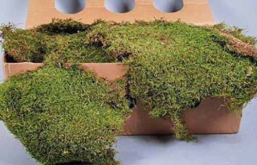 Fragmentos de musgo seco, verde, 2kg - natural / decorativo - artplants