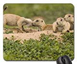 Yanteng Tapis de Souris de Jeu, Tapis de Souris, Chiots de Prairie Cute Wildlife Nature Wilderness