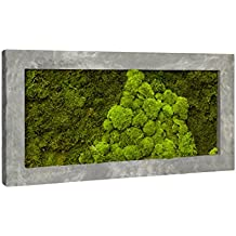 Moosbild, immergrünes Wandbild, Pflanzbild, Rahmen anthrazit, 100 x 50 cm, EVRGREEN