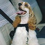 Hunde Sicherheitsgurt L
