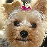 1art1 74751 Hunde - Yorkshire Terrier Mit Rosa Schleife