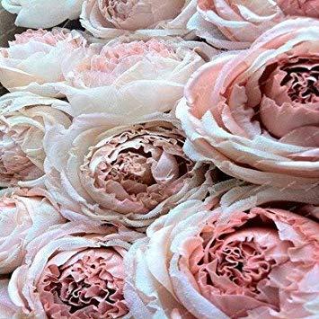 vonly 2018 Neue Ankunfts-chinesische seltene exotische Schöne Pfingstrosen-Blumen-Bonsais, mischen Farben zu wählen, 5 PC/Beutel für Hausgarten-Plantting: Sonstiges