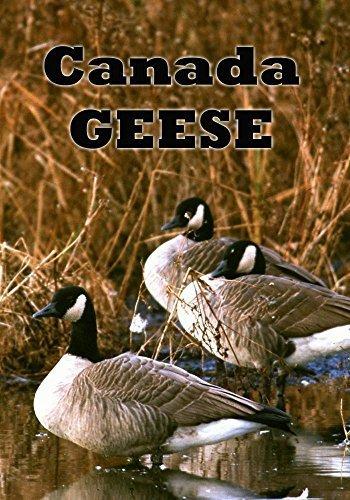 Preisvergleich Produktbild Canada Geese