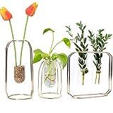 GUOLIAN Hydroponische Vase Glas, Vasen für Blumen & Pflanzer Home Dekoration - Rose Gold Metallrahmen, Reagenzglas, ideal für Jede Pflanze oder Faux Pflanzen (3 in 1, Gold)