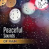 Oasis Umbrellas - Best Reviews Guide