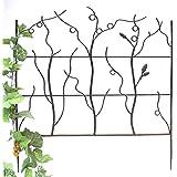 Support pour plantes grimpantes - Support plantes grimpantes fer forge ...