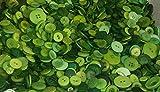 Celloexpress® Grüne Knöpfe, verschiedene Größen, verschiedene grüne Knöpfe zum Nähen und Basteln, grün