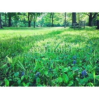 adrium Holz-Bild 80 x 60 cm:Springtime in park, Bild auf Holz