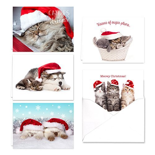Weihnachten Katzen Urlaub Karte Sortiment PACK-Set von 25Karten-5von jedem Design, mit Innen mit Umschlägen (Store-gruß-karten)