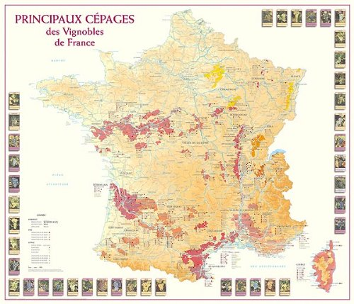 Principaux Cepages Vignobles de France (25)