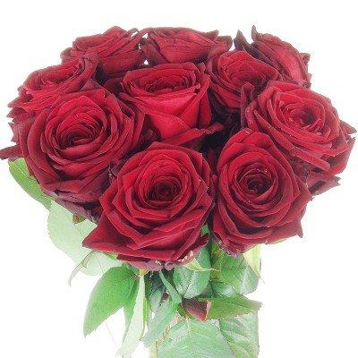 10 rote Rosen – Premiumrosen XXL – Großblütig, langstielig und vasenfertig