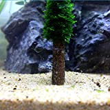 Sharplace 2pcs Künstliche Baumstamm Baum für Moos Pflanze Anbau Aquarium Deko
