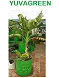 YUVAGREEN Plastic Big Size Terrace Gardening Grow Bag for Fruits, Banana, 24x24inch, 2x2ft Green