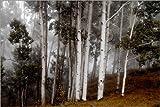 Posterlounge Acrylglasbild 180 x 120 cm: Wolken über den Espen im Wald von Ben Horton/National Geographic - Wandbild, Acryl Glasbild, Druck auf Acryl Glas Bild