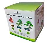 BONSAIBAUM SAMEN SET x3- Züchten Sie ihre eigenen Bonsaibäume - Geschenkset. bonsai männer geschenke geschenke für frauen geburtstagsgeschenk für männer blumen pflanzen zimmerpflanzen baum