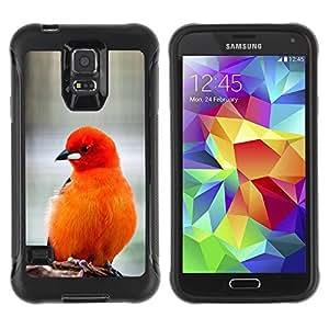 Weich TPU Hülle Schutz Etui für Samsung Galaxy S5 SM-G900 / bird feathers orange red furry beak / STRONG