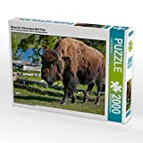 Bison im Yellowstone Nat'l Park 2000 Teile Puzzle quer (CALVENDO Tiere)
