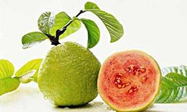 Floral Treasure Thailand Red Guava Fruit Seeds - Pack of 50 Seeds
