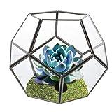 Urase Gemoetrisches Glasterrarium Blumentopf Sukkulente Pflanzen Glas Terrarium Bonsai Box Tischdeko für Fensterbank Balkon Tischplatte