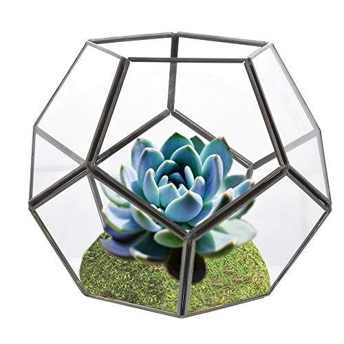 urase 6/pieza Posavasos cer/ámica absorbie renden Salvamanteles Redondo Caf/é T/é Taza de cristal boho