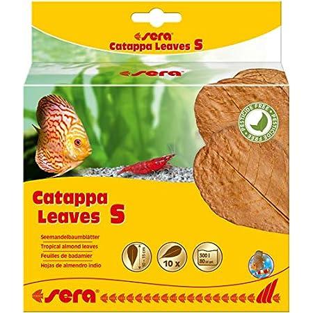 sera Catappa Leaves Seemandelbaumblätter verschiedene Größen fördern die Laichbereitschaft von Fischen & Garnelen, sie beugen bakteriellen Infektionen & Verpilzungen vor, Garnelenfutter & Krebsfutter
