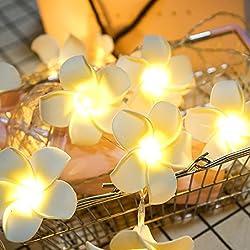 Kingko 10er LED Lichterkette Vintage Frangipani Blume Batteriebetrieb warmes weißes Licht (Warmweiß)