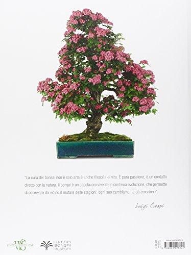 Bonsai-Ediz-illustrata