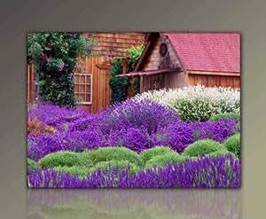 wandbild xxl g nstig modern wonderful lavender 80x110cm lavendel garten deko bilder fertig. Black Bedroom Furniture Sets. Home Design Ideas