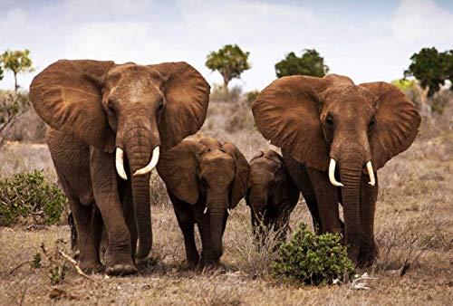 Puzzle Clásico Adulto 1000 Piezas Familia De Elefantes En La Pradera.La Mejor...