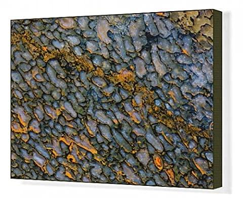 Canvas Print of Colorful Petrified Dinosaur Bone
