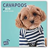 Cavapoos 2019 - 18-Monatskalender: Original Myrna-Kalender [Mehrsprachig] [Kalender]
