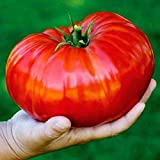 FastDirect Semillas de Tomate Multicolor 10/20/50/100 PCS Semillas de Verduras Raras...