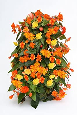 The Flower Tower