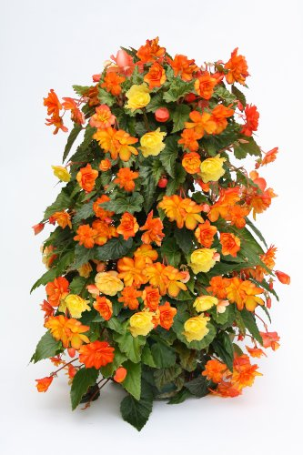 The Flower Tower FT001 - Flores, color negro