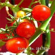 Nueva Bonsai semillas de tomate 100pcs 10kinds mezclar semillas de hortalizas novela de Plantas para Jardín de envío gratuito