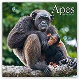 Apes - Affen 2020: Original Avonside-Kalender [Mehrsprachig] [Kalender]