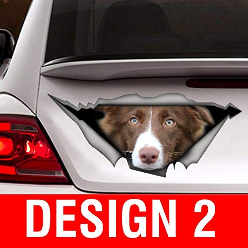 Sticker/Brown and White Border Collie car Sticker Vinyl Sticker for Cars, Windows, Walls, Fridge, Toilet and More - 11 Inch -