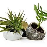Chive–Koski, Luftpflanzenbehälter, handgefertigter kleiner, ovaler Keramiktopf, Tillandsien, Bromelie, Sukkulent und Kaktus-Behälter, 3er-Set, je 1Stück in Weiß, Schokoladenbraun, Schwarz