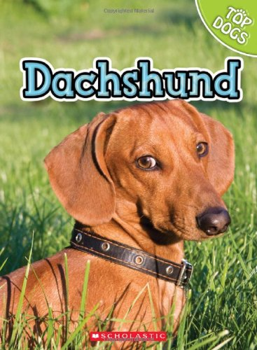 Dachshund (Top Dogs)