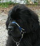 Dogmatic Hundehalfter, gepolstert, aus Netzstoff, Größe 8, Blau
