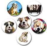 Merchandise for Fans Englische Bulldogge Porträt - 6 große Kühlschrankmagnete Ø 5 cm [ 01 ] für Memoboard Pinnwand Magnettafel Whiteboard