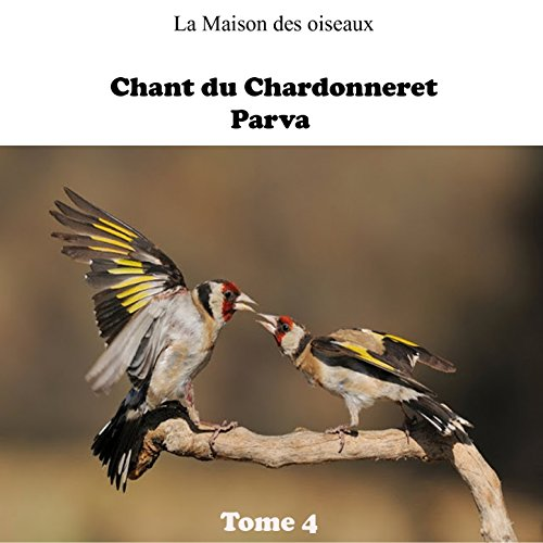 chant chardonneret htatba tipaza ( )